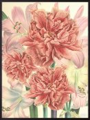 Vanilla Fly - Poster Peonies & Lilies 30X40